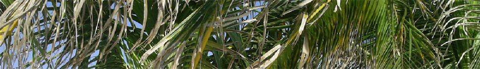 RudeMocks header image 3