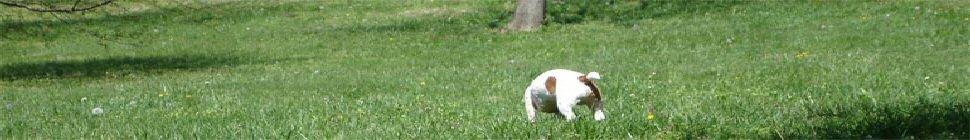 RudeMocks header image 2